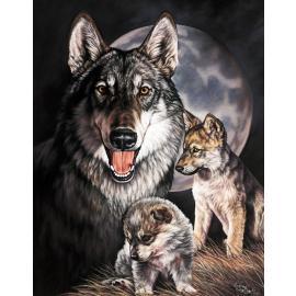 Poster di latta Tin Sign Graham Wolf Experience